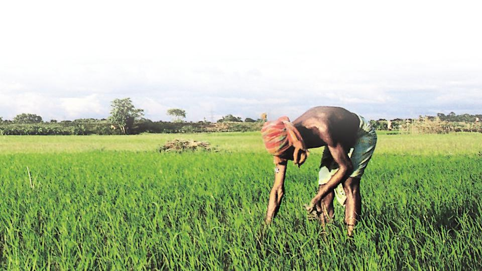 Upper caste farmers stand to gain more from loan waivers