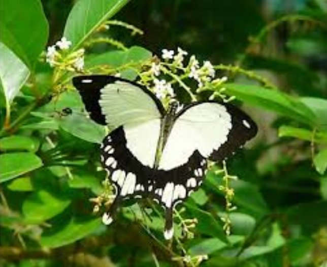 Malindi residents reap big from butterfly farming