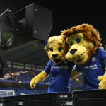 RT : Just checking it out... 🦁 #CHEARS h...