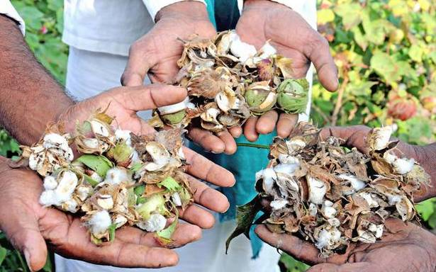 12 lakh farmers seek ₹6,000 cr. from private seed companies