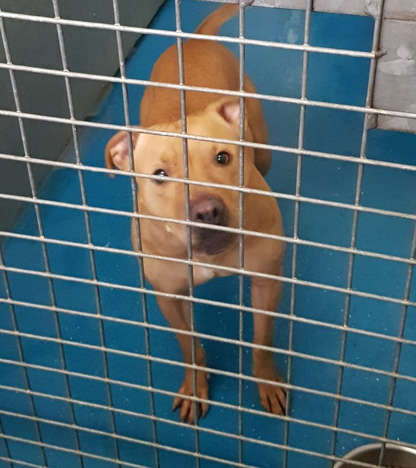https://t.co/9JdiAqwh29: Found: Tan Cross Breed Female In #Coventry #CV1 @DoglostUK https://t.co/DcCD9P1ds9 https://t.co/raqTJS62tf