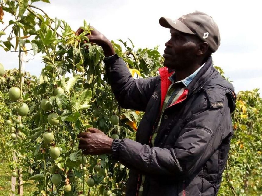 Passion for passion fruits opens markets for Kericho farmer
