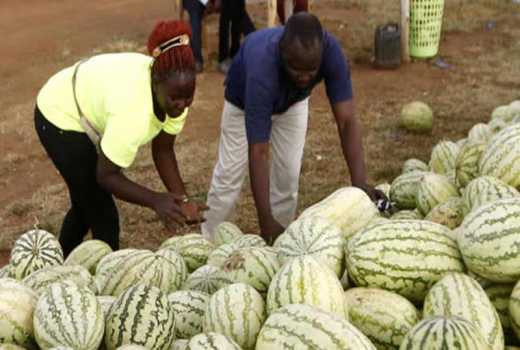 Most traders import watermelons from Uganda and Tanzania