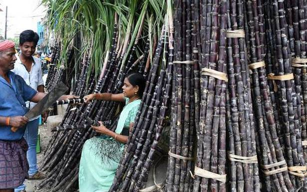 A bitter Pongal for sugarcane farmers