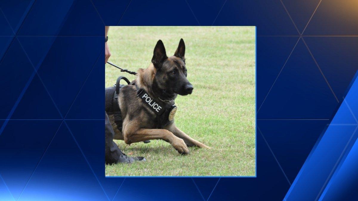 Trussville police K9 receives bullet, stab protective vest