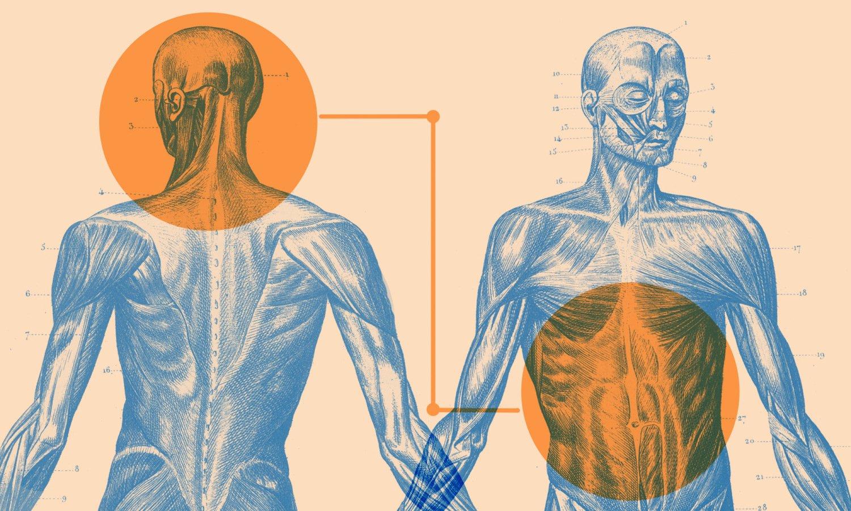 A scientist explores the mysteries of the gut-brain connection: https://t.co/e0Cbg0BCk9 https://t.co/FVQTYGKCVL