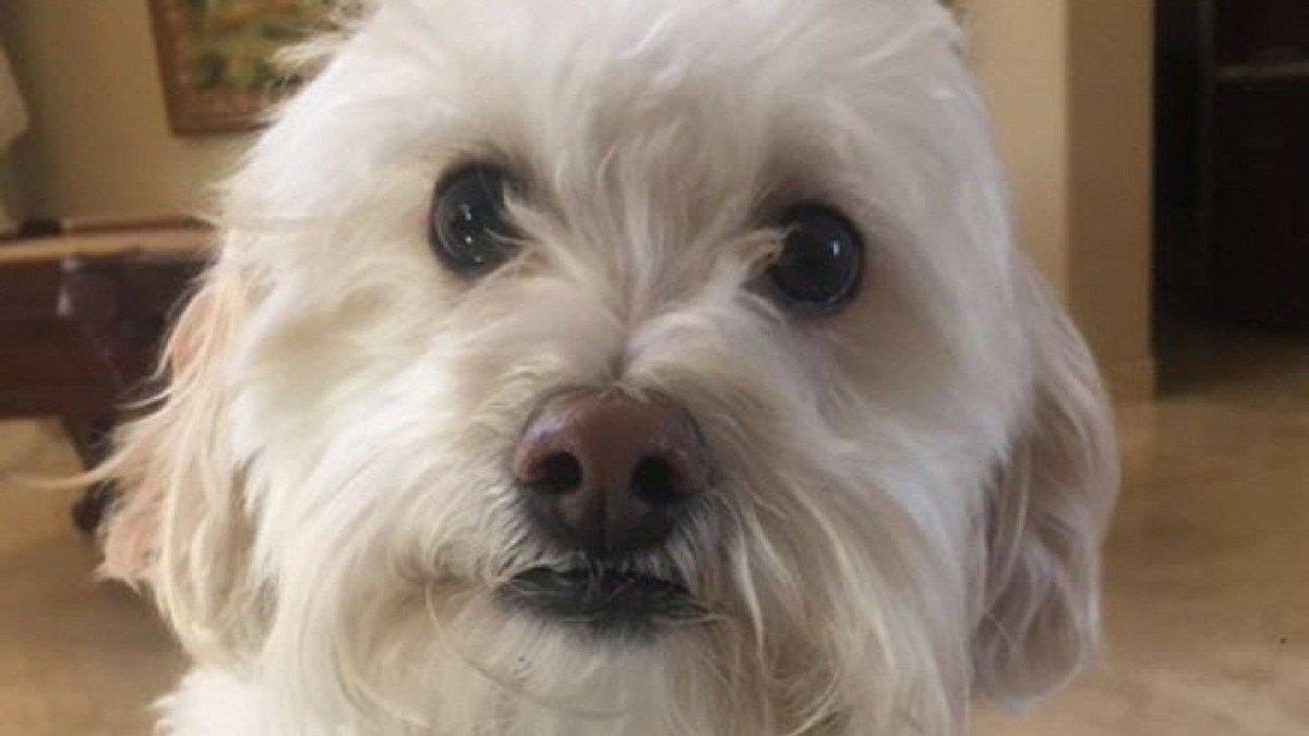 Phoenix family dog found hanged to death inside mobile pet groom