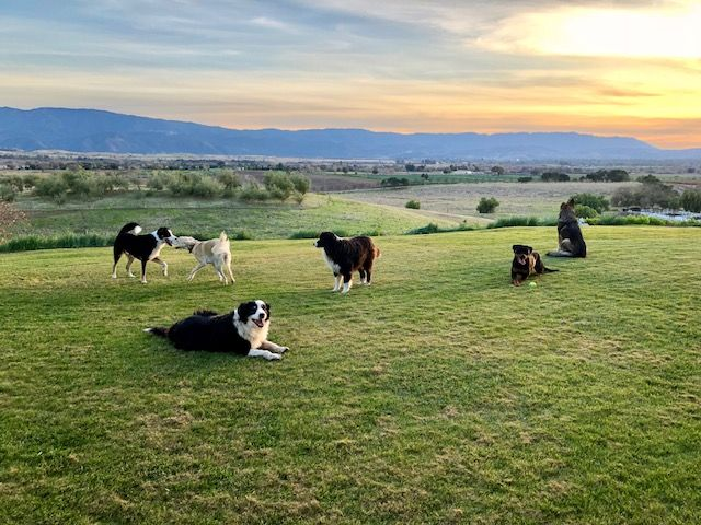 Some of my favorite https://t.co/3tfFP1zffH customers enjoying the end of a glorious day! #itsbathtime #california #dog Have you joined my pack? https://t.co/nFTQ7HEWSE https://t.co/thjVyAdipH