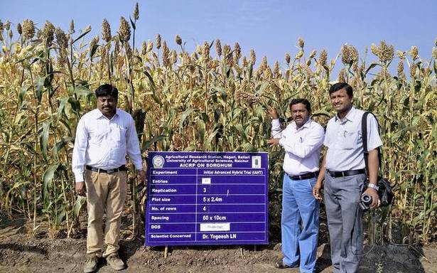 Farm station takes up research inover 200 varieties of sorghum