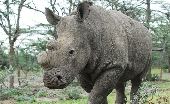 Rhino Shot Dead By Poachers In Kaziranga National Park