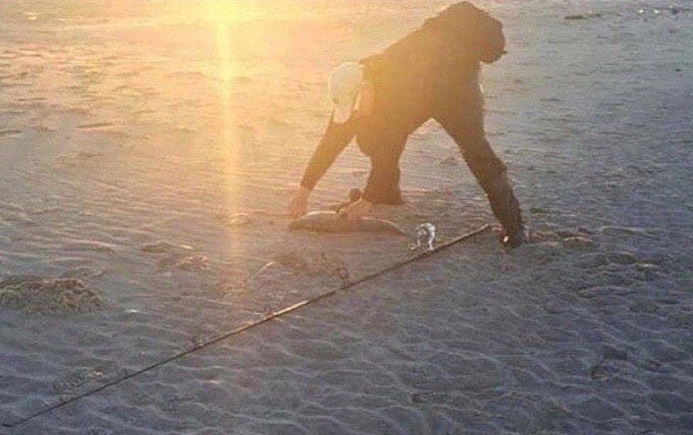Not a gorilla walking on the beach: https://t.co/vhPmkIEGDZ