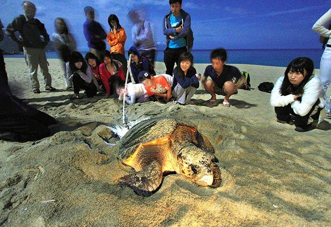 Endangered sea turtles losing key guardian as NPO has to close