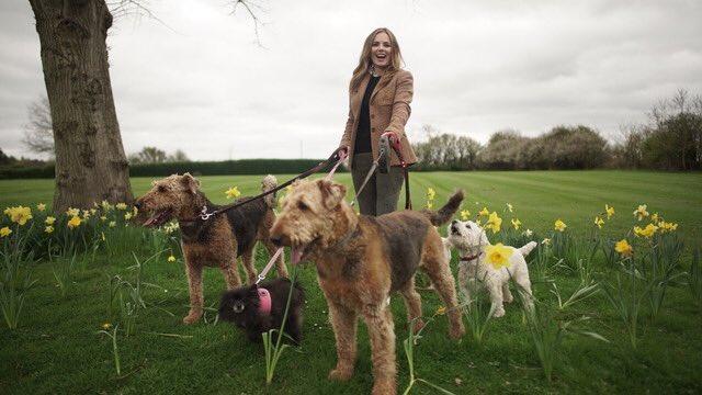 I'm on tv tonight Britain's Favourite Dogs: Top 100 Tonight. 7:30pm. @ITV   #BritainsFavouriteDogs https://t.co/NaB5eb3uQR