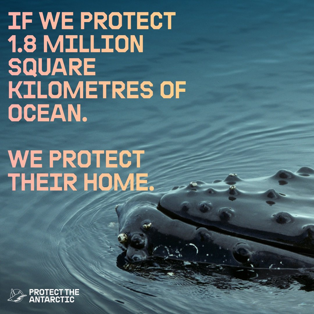 RT if you want to #ProtectAntarctic https://t.co/X5CiWD67Wv https://t.co/GXKHZAIV7o