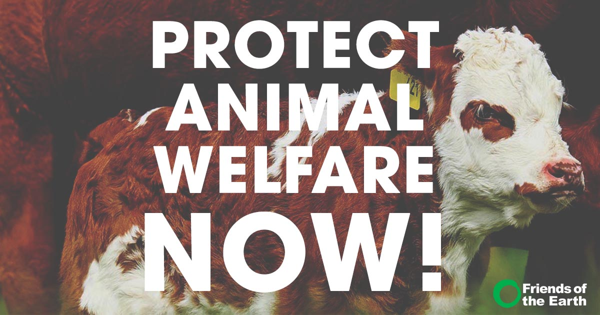 test Twitter Media - Stand up to Trump's vicious attacks on animal welfare protections & organic! #OrganicForAll   https://t.co/wGCwLriGFI https://t.co/hj9UcbDRes
