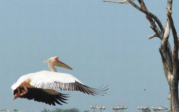 Bird census in 100 wetlands in State, Telangana