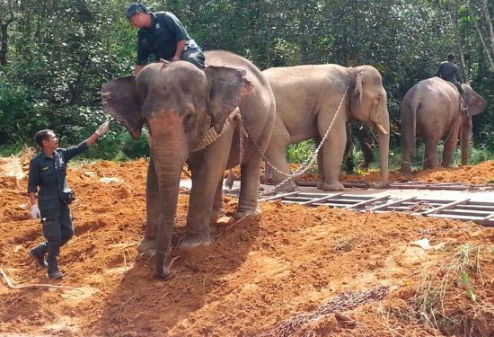Game rangers relocate two rogue elephants to national park