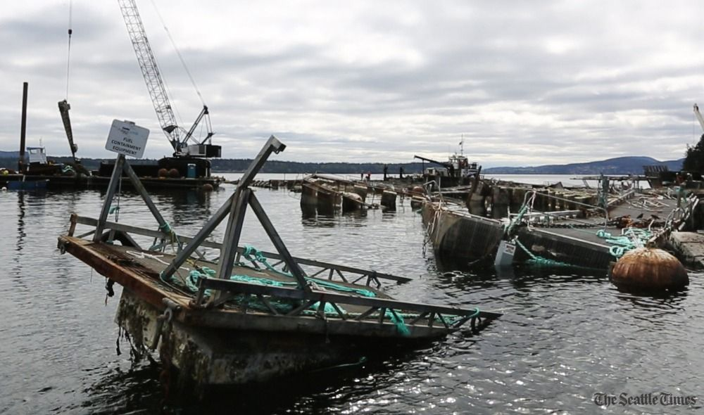 Fish farm caused Atlantic salmon spill near San Juans, then tried to hide how bad it was, state says