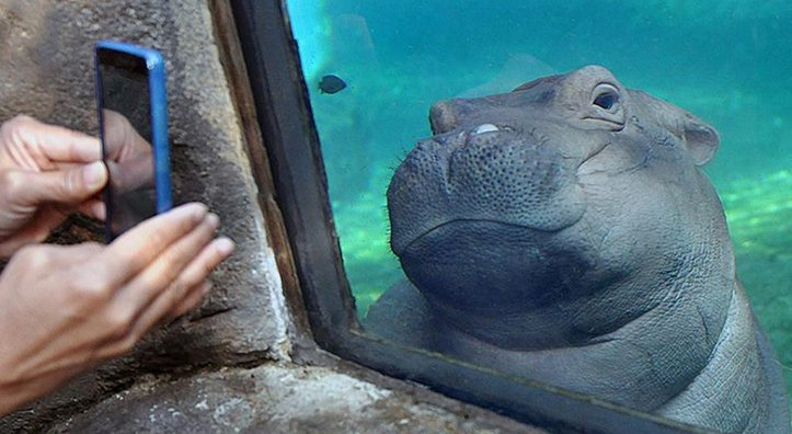 BTW this is my new favorite Fiona pic, she's so self-aware it's amazing #CutieCleanse #TeamFiona https://t.co/OIJNZpqA9u