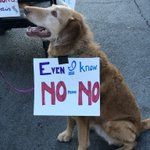 RT : My favorite #protestpups of the day💕...