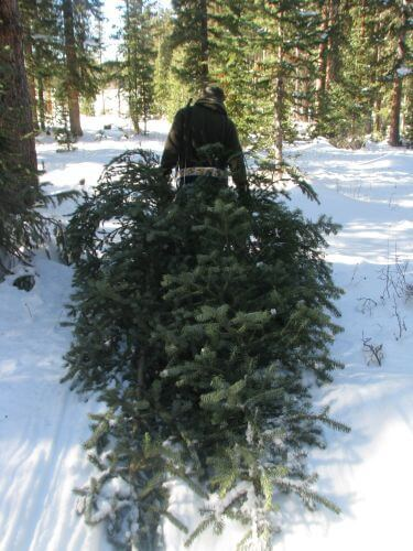 Cost To Cut Your Own Christmas Tree Could Go Up
