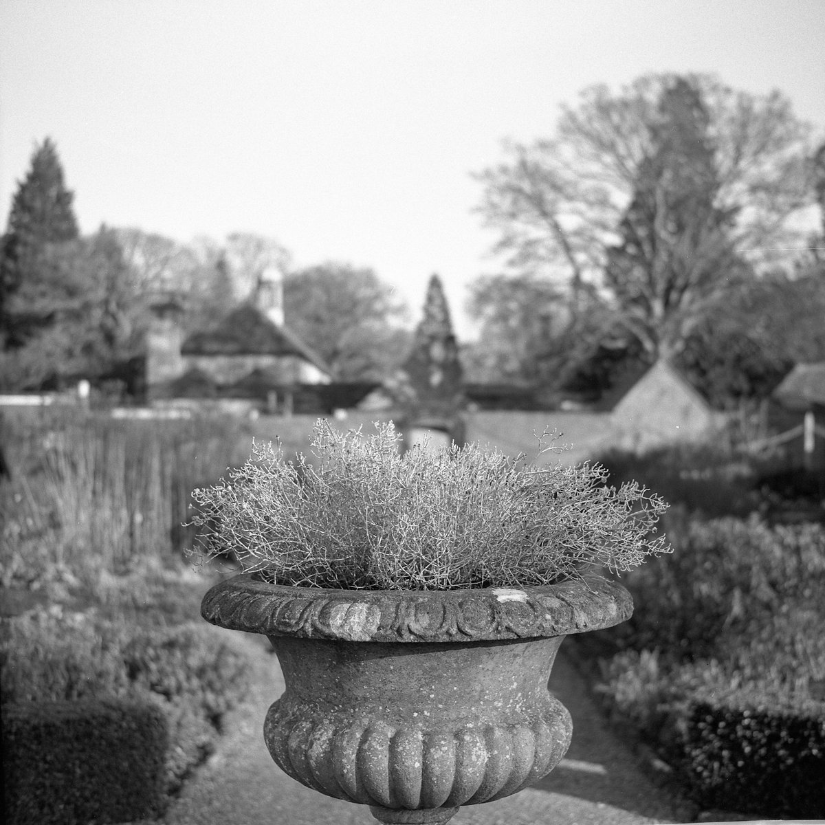 RT @calor_gas_terry: #FP4Party Day 7. The walled garden at Wakehurst Place. Zeiss Ikonta LC29 0.5+9.5 https://t.co/vxHrkEW0lN