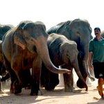 Sri Lanka police lose gun as elephants charge