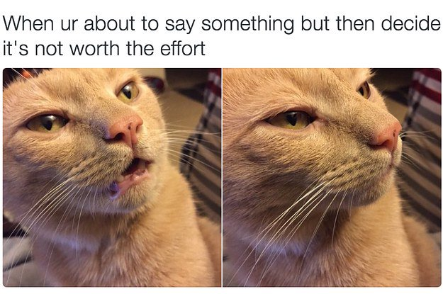 RT @BuzzFeed: 18 times cats were actually relatable AF https://t.co/3jnXBlWWjL https://t.co/JuxVI6tRbh