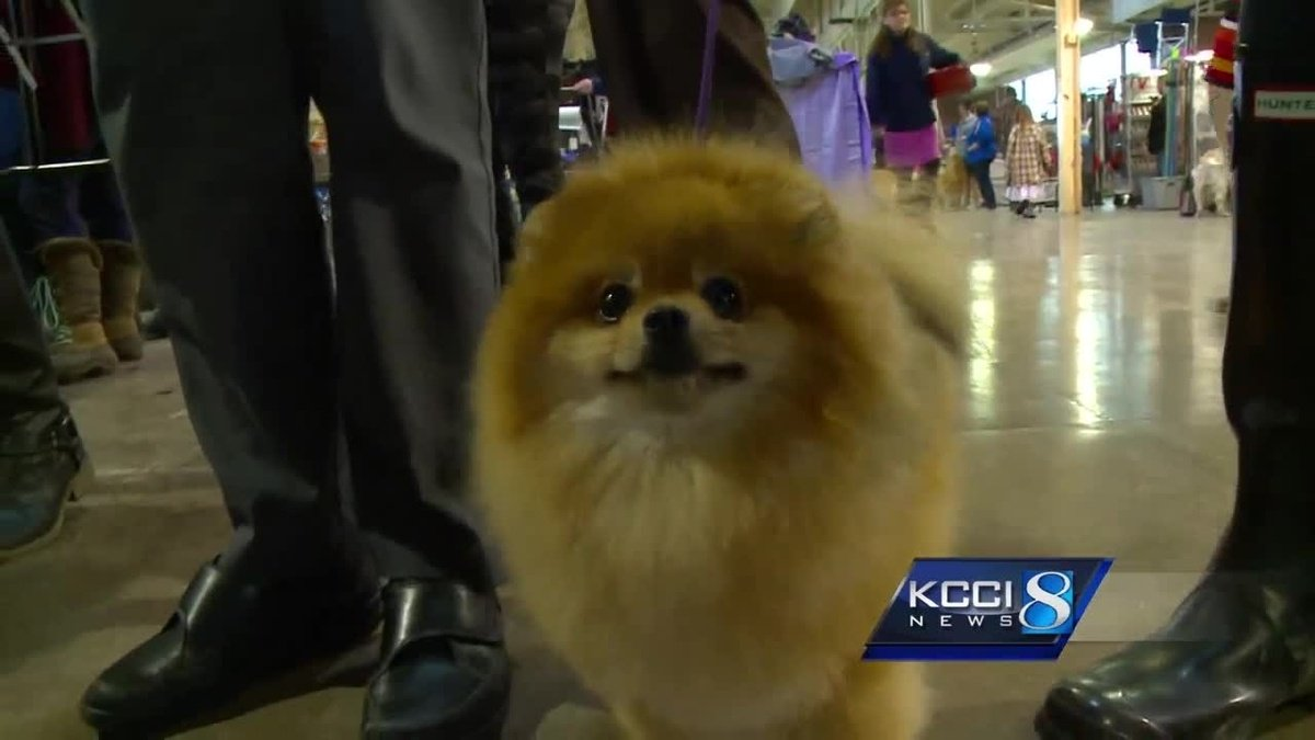 Central Iowa Kennel Club Dog Show takes over fairgrounds