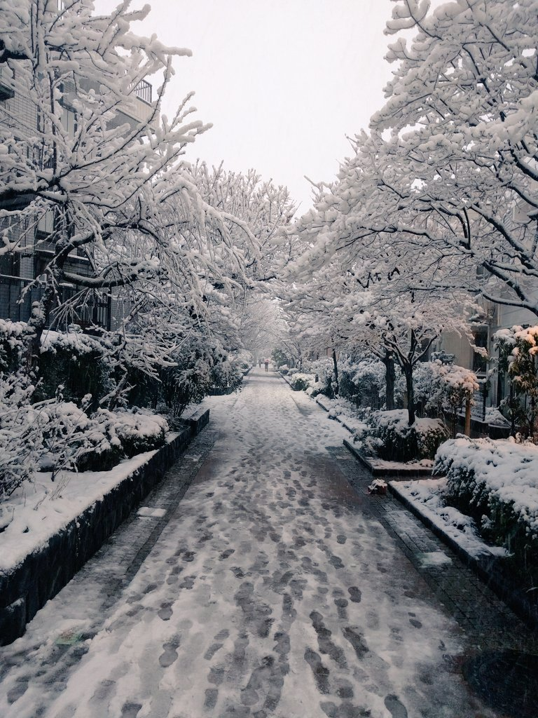The usual way to home today was white snow #tokyo https://t.co/whakqOBiOa