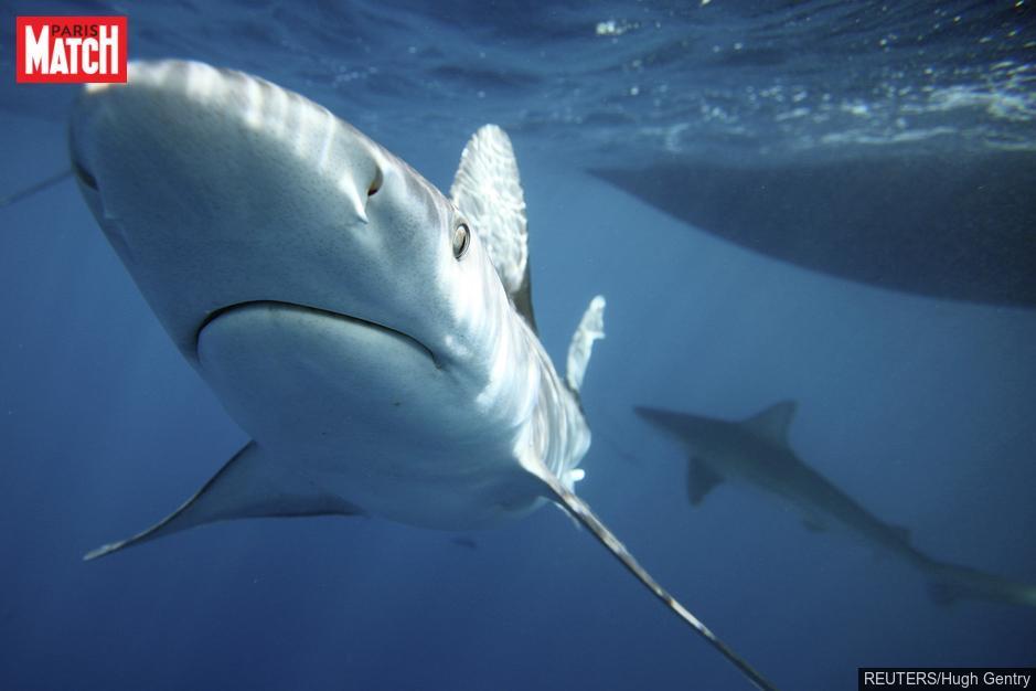 Un homme attaqué par un requin en Nouvelle-Calédonie