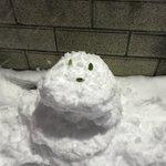 RT : 雪が降ってテンション上がったので雪だるま作ったり飛び込んだりした...