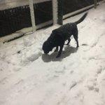 犬と雪合戦してきたんだけど犬がはしゃぎすぎて突然吐いた。こいつ人間だったら修学旅行に行ってはしゃいで...