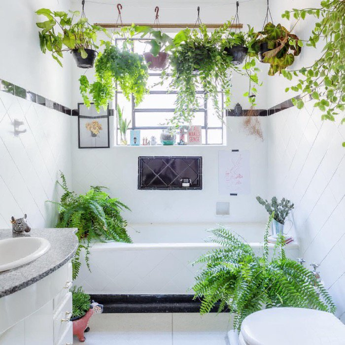 Have you got a shower plant?! Here's the lowdown on the latest leafy-green interiors trend: