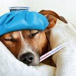 Veterinarians warn pet owners of dog flu