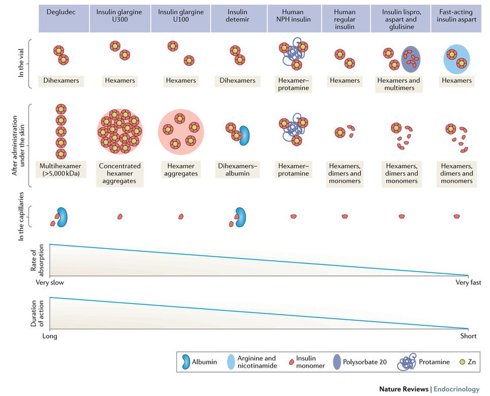 test Twitter Media - #MustRead - #Insulin analogues in type 1 #diabetes mellitus: getting better all the time (£) https://t.co/t8pAOy75wI https://t.co/3QL31E94HF