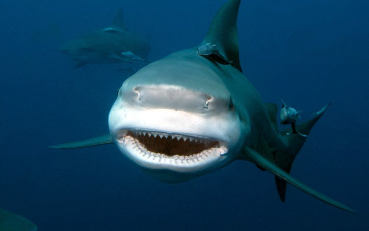 Diver injured in New Caledonian shark attack