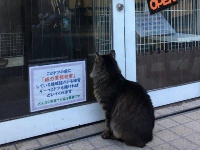 "RT @news_line_me: ネコがドア前で""威力業務妨害""?カフェの貼り紙がほほえましい https://t.co/pYpYC0NPy4 https://t.co/HfrtDO7cXa"
