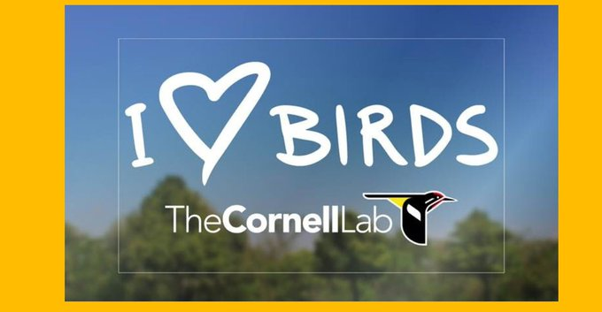 Get a FREE I Love Birds Decal! - FREEBIES