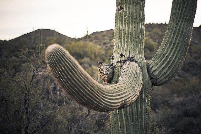 It's cactus o'clock! #photography #saguaro #Tucson https://t.co/vib81PovYj