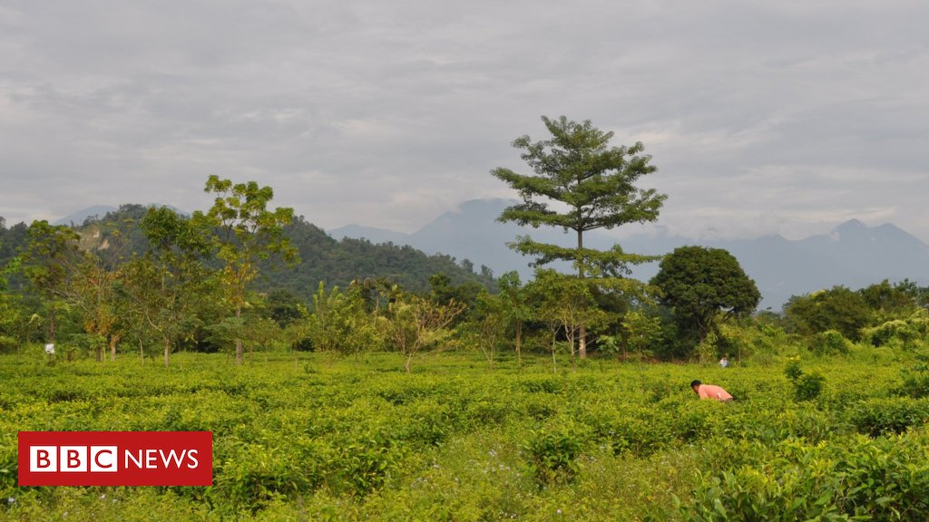 The human-elephant conflict in India's tea state Assam