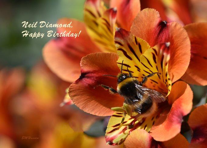 "Happy Birthday, Neil Diamond! Thanks for the creation \""Sweet Caroline!\"""
