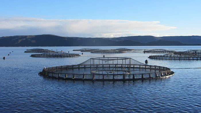 Secret benefactor pledges cash to help fight 'big salmon'
