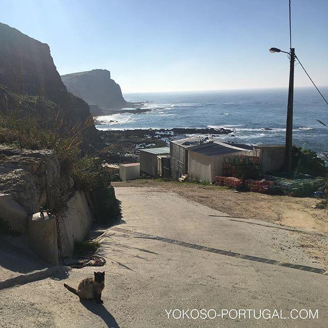 test ツイッターメディア - 冬のエリセイラの海とネコ。 #エリセイラ #ポルトガル https://t.co/Hj3wlr1oaG