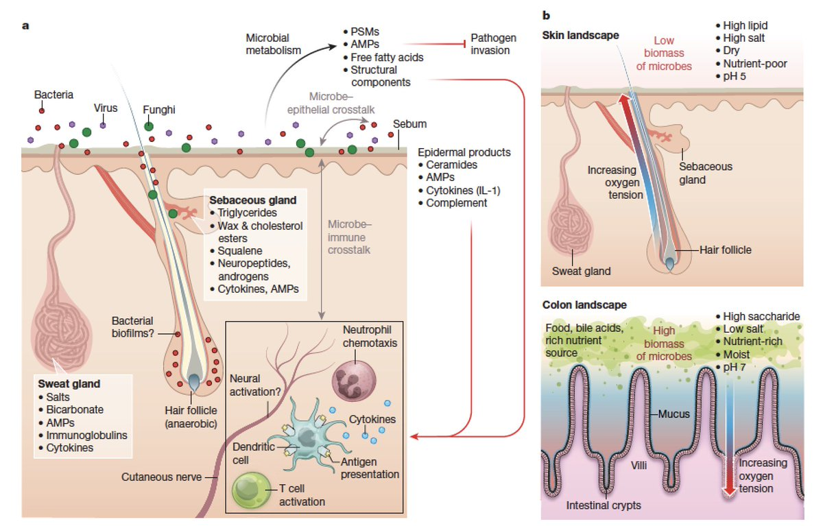 Terrific Review Of The Skin Microbiome Re Biology And