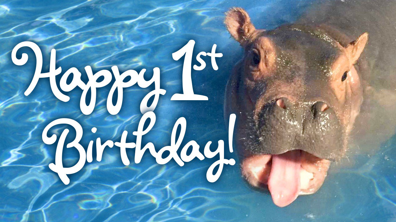Happy 1st Birthday to the cutest hippo & social media queen Fiona! #TeamFiona https://t.co/LhrEBoDPk3