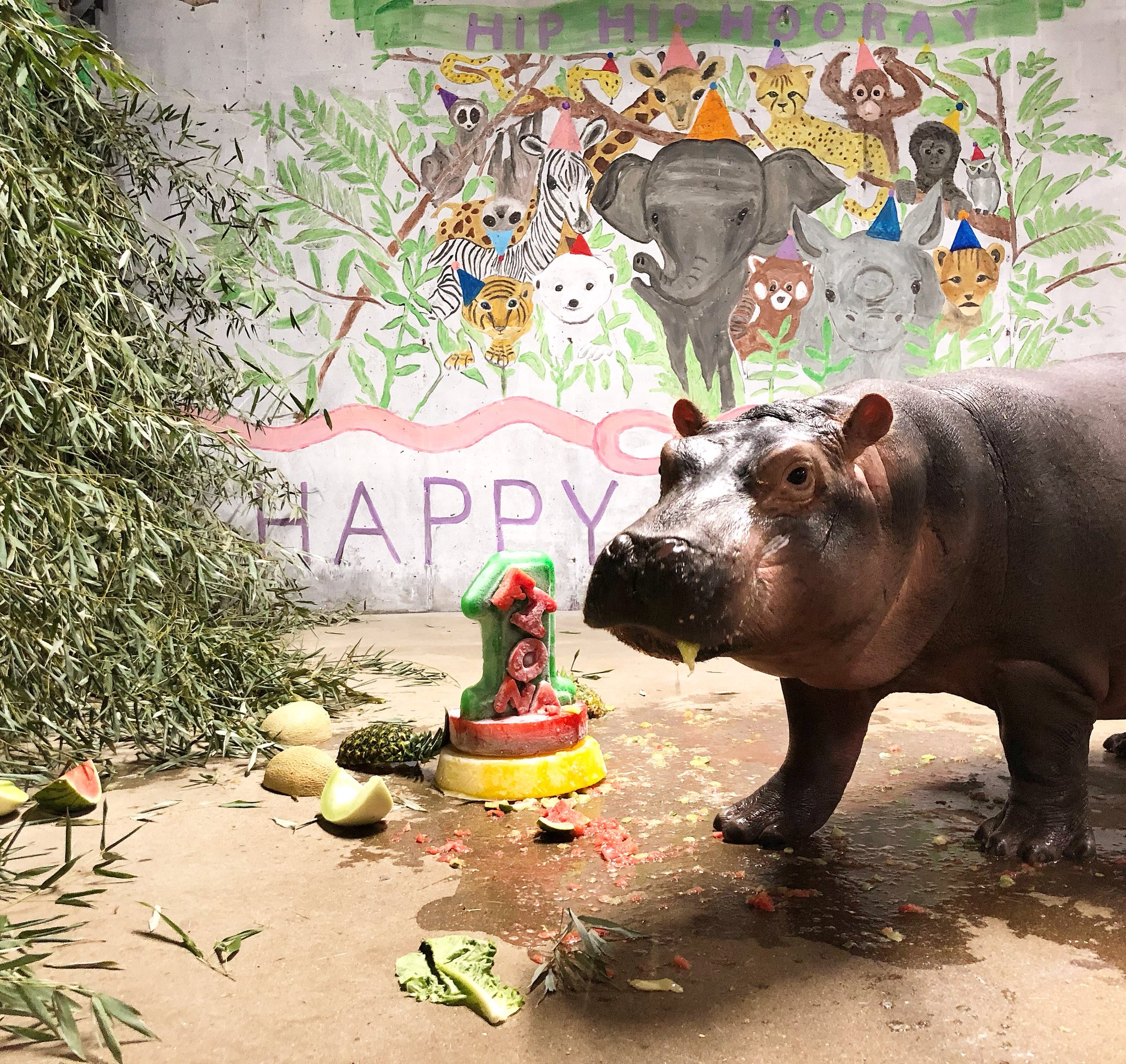 Happy birthday Fiona! #TeamFiona https://t.co/KWtQuXiryW