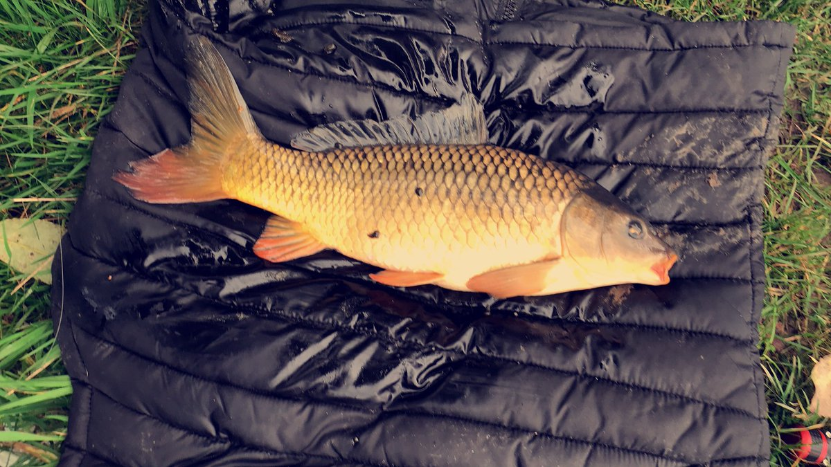 #rookieangler #1stevercommon #<b>Commoncarp</b> #carpfishing https://t.co/OZQpThN04U