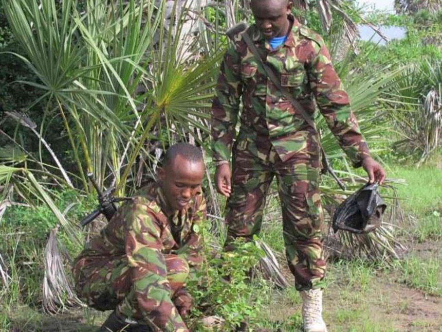 Lamu police hunt unreported returnees 'spying for al Shabaab'