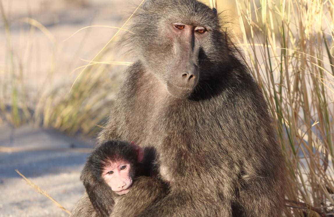 Paris Zoo evacuated after 52 baboons escape their enclosures
